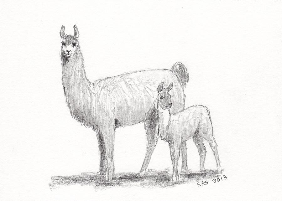 Back to Sherri Strikwerda   Art > Drawings > Llama Drawings