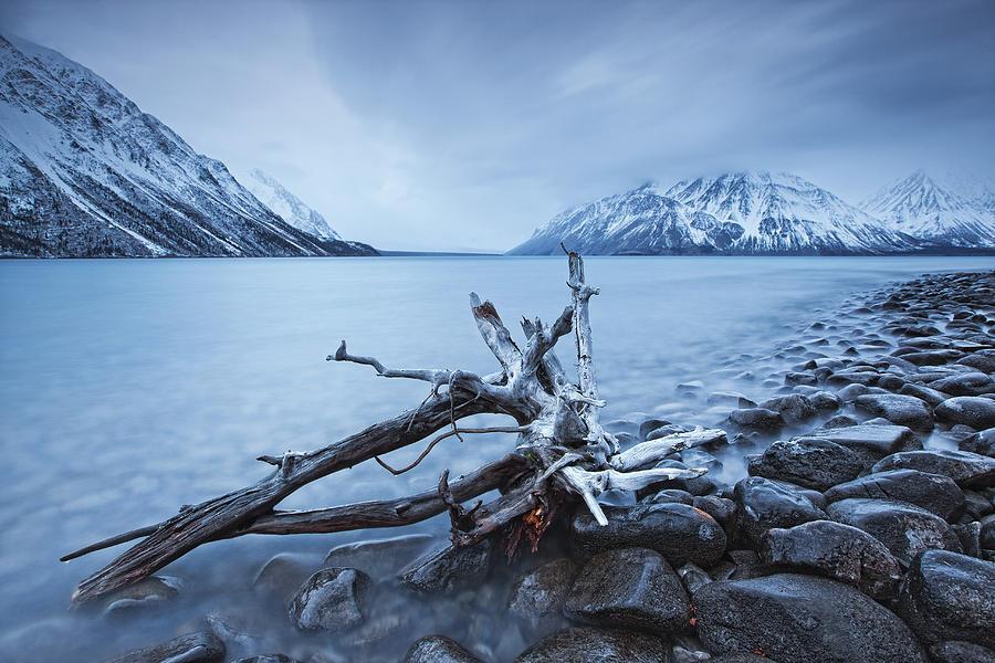 Log Along The Shores Of Kathleen Lake Photograph