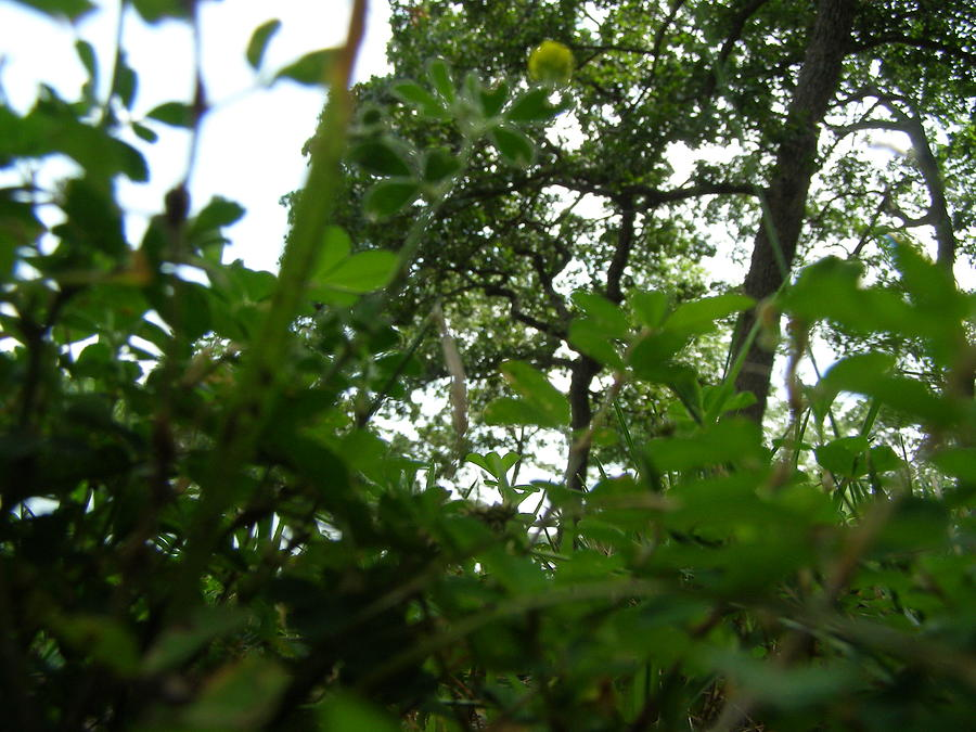 Green Photograph - Loking Up At The World by Brityn Klehr