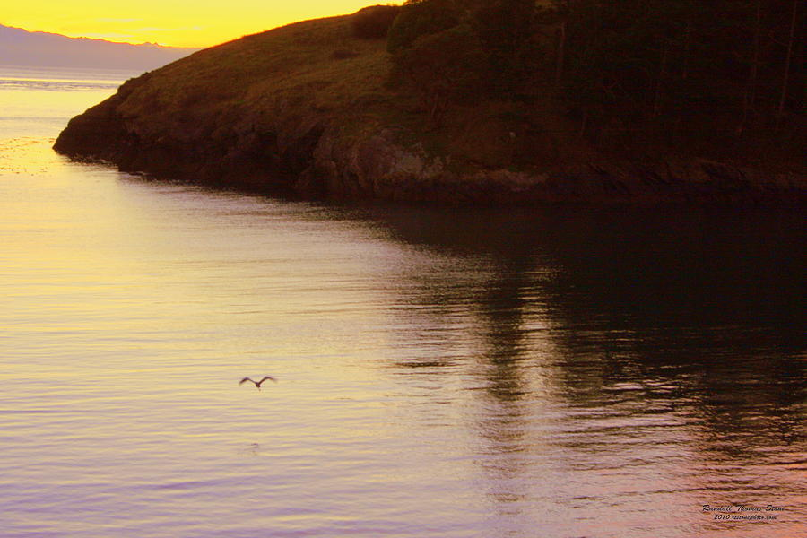 Sunset Photograph - Lone Bird At Rosario Beach Point by Randall Thomas Stone