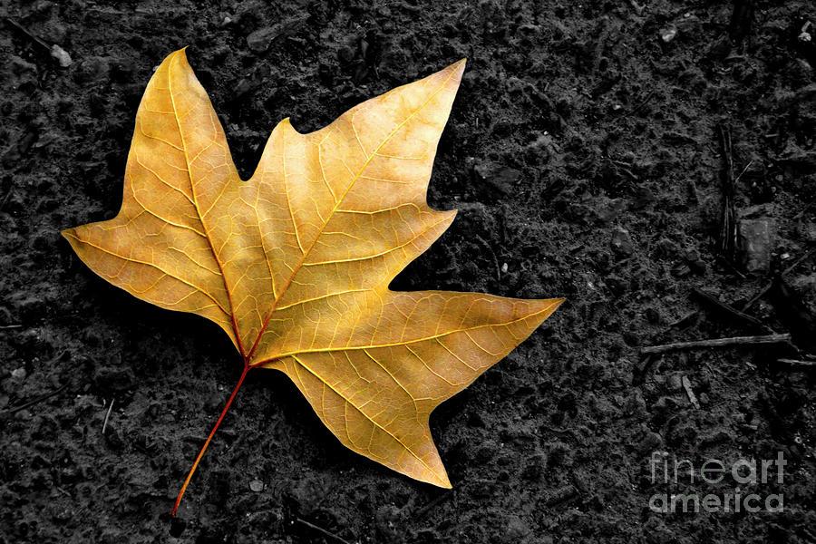 Lone Leaf Photograph