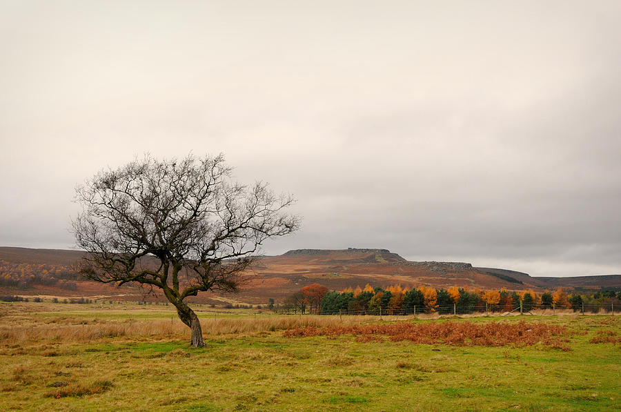Derbyshire Photograph - Lone Tree And Higger Tor by Siobhan Brennan-Raymond
