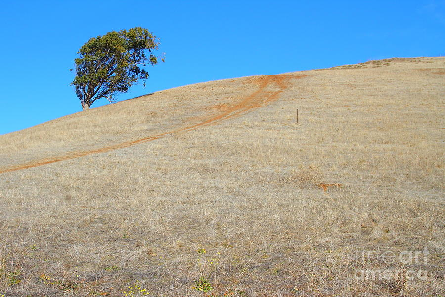 Lone Tree At Coyote Hills California . 7d10906 Photograph