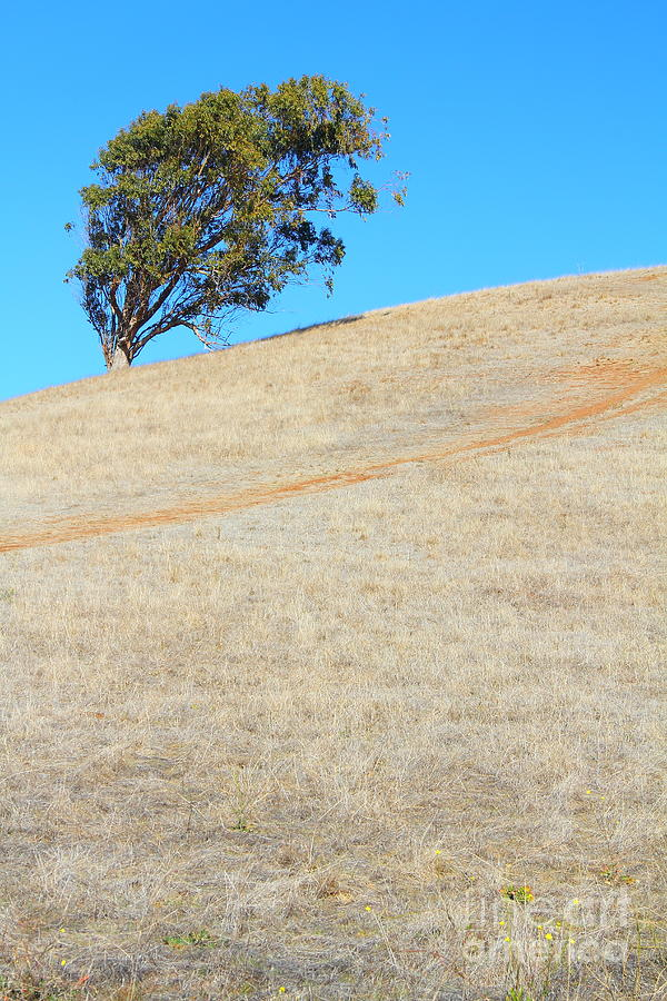Lone Tree At Coyote Hills California . 7d10908 Photograph