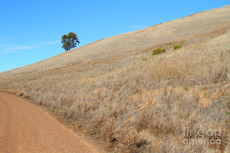 Bay Area Photograph - Lone Tree At End Of The Trail At Coyote Hills California . 7d10920 by Wingsdomain Art and Photography