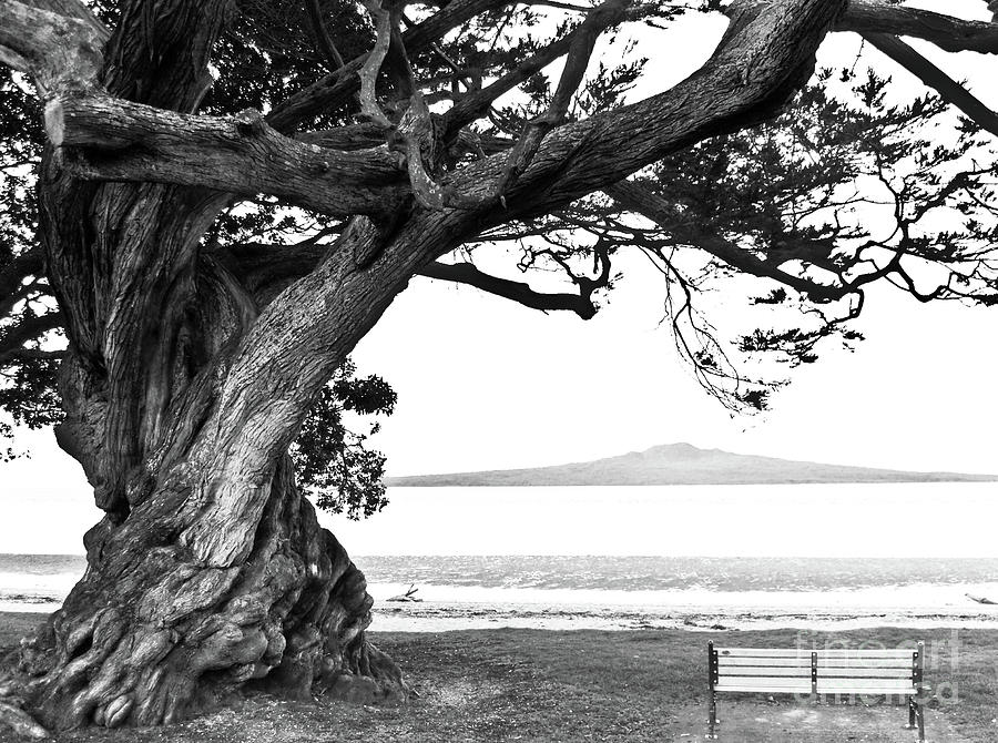 Lone Tree Bench And Volcano Pyrography  - Lone Tree Bench And Volcano Fine Art Print