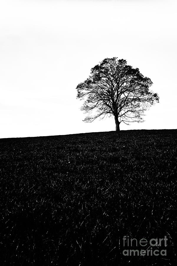Lone Tree Black And White Silhouette Photograph