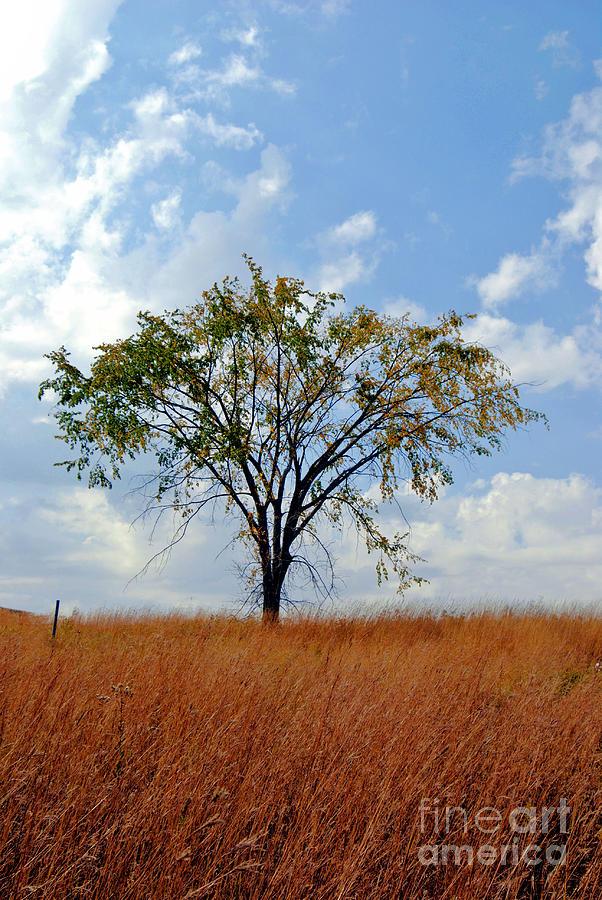 Golden Grass Photograph - Lone Tree In Autumn by Giliane Mansfeldt