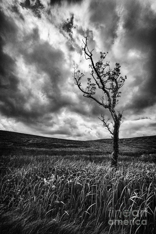 Lone Tree On The Ayrshire Moors Photograph  - Lone Tree On The Ayrshire Moors Fine Art Print