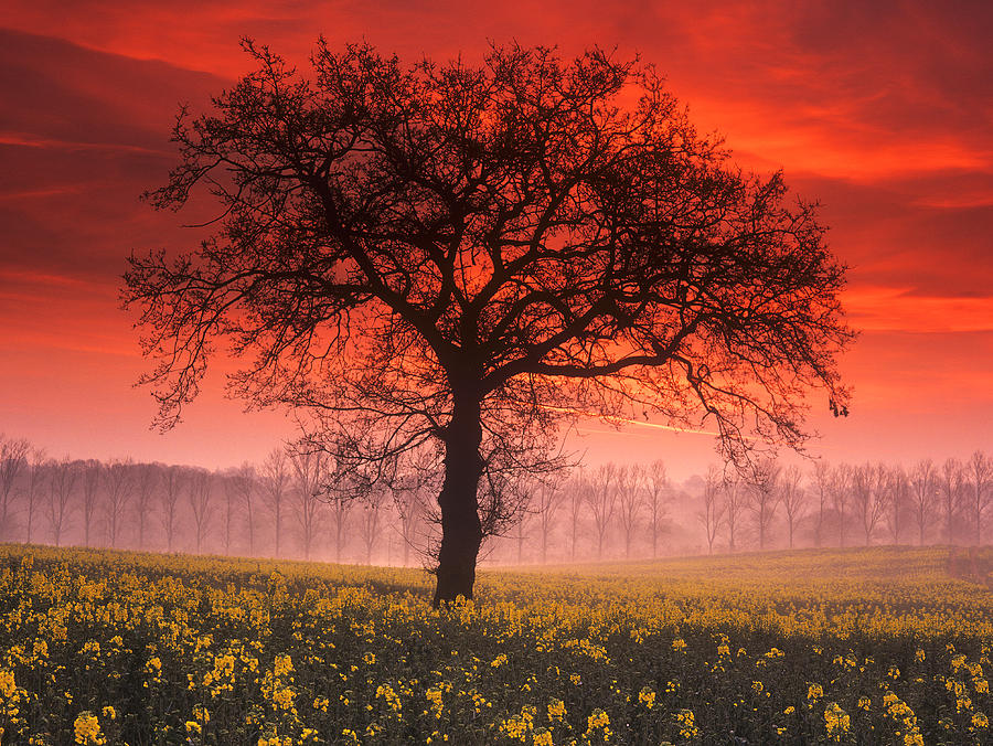 Lone Tree Sunrise Photograph  - Lone Tree Sunrise Fine Art Print
