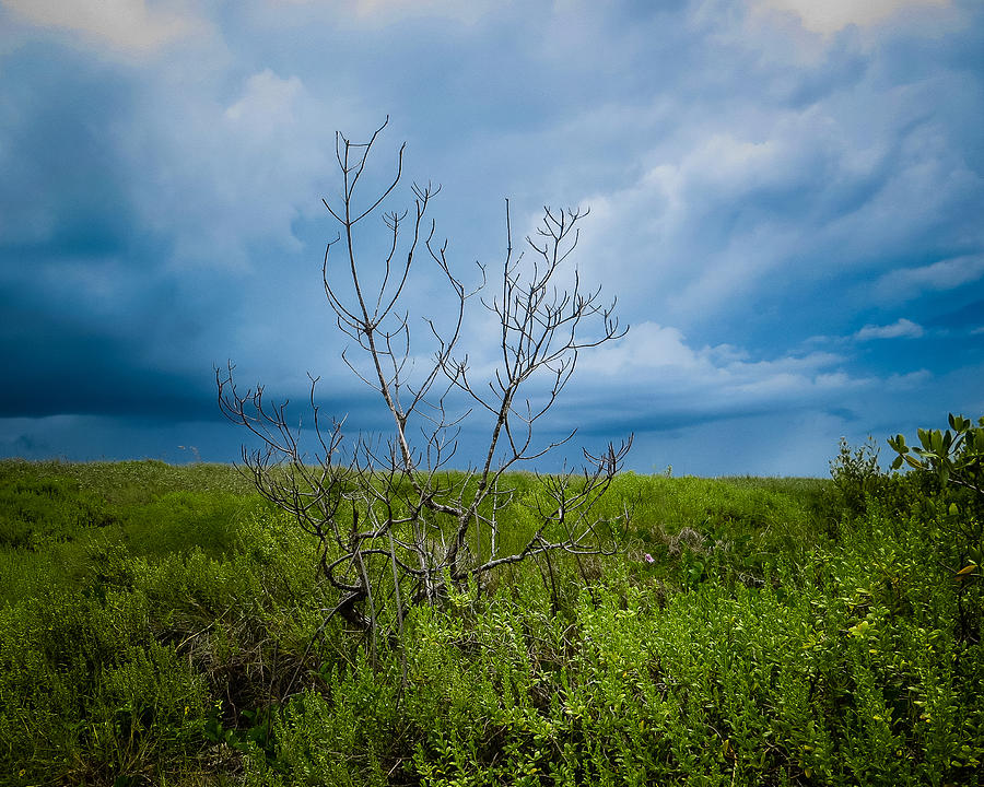 Tropical Photograph - Lone Tree by VJ Musick