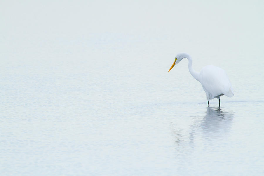 Lonely Egret Photograph