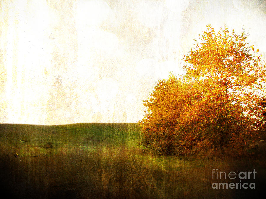 Lonely Sycamore Photograph  - Lonely Sycamore Fine Art Print