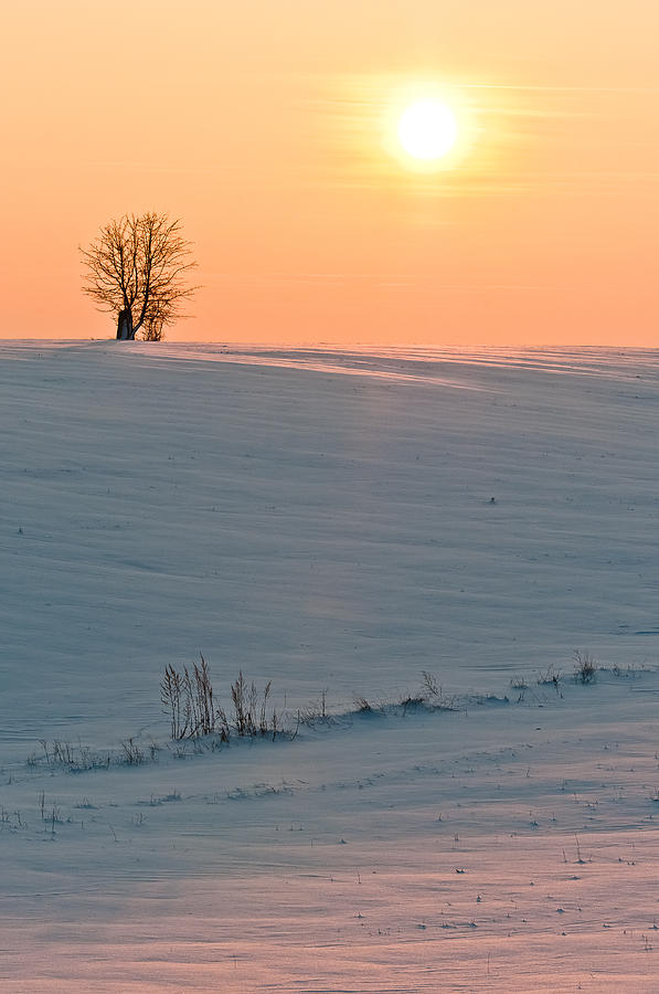 Lonely Tree Photograph  - Lonely Tree Fine Art Print