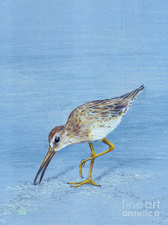 Long-billed Dowitcher Drawing  - Long-billed Dowitcher Fine Art Print