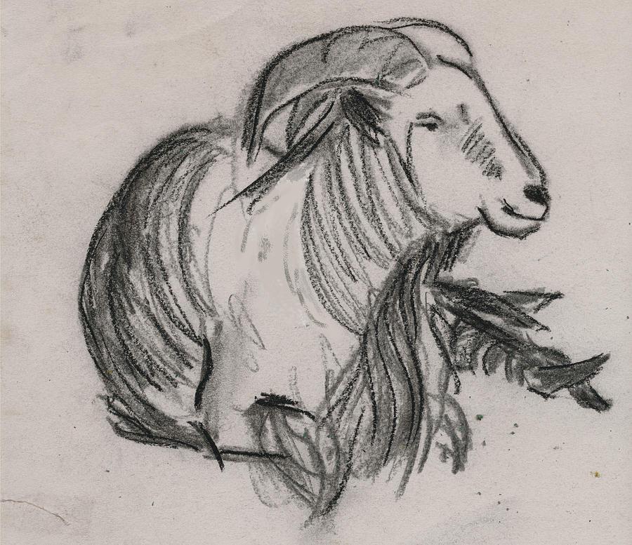 Long Horned Mountain Goat Painting - Long Horn Mountain Goat by Ethel Vrana