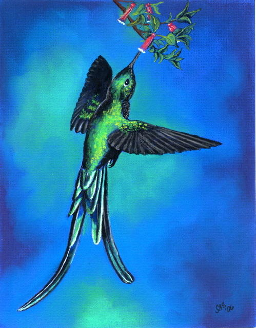 Long Tail Sylph  Pastel