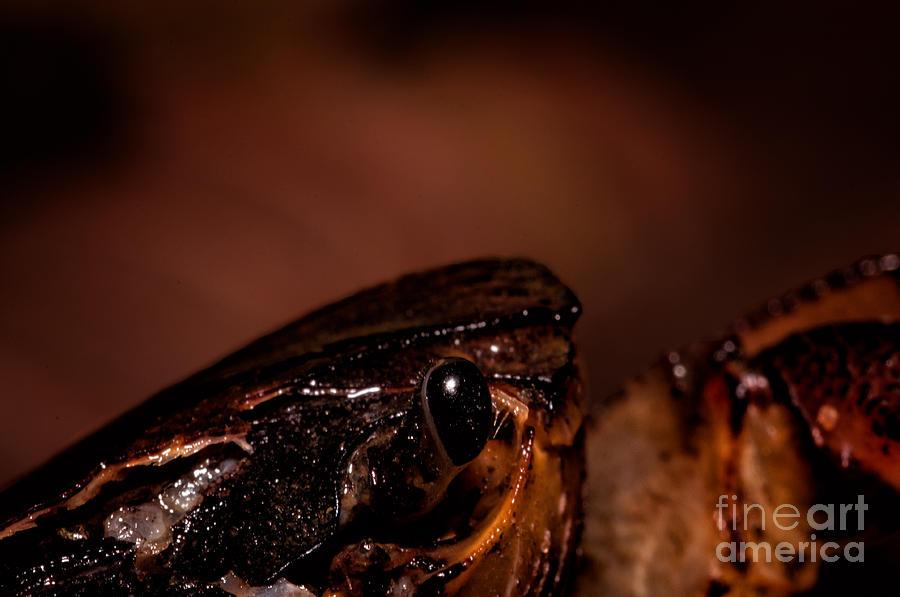 Crab Photograph - Lost Hope by Venura Herath