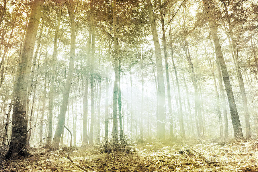 Lothlorien by Violet Gray: fineartamerica.com/featured/lothlorien-violet-d.html
