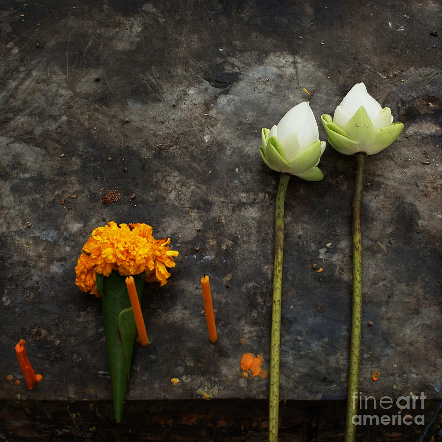 Lotus Flowers On A Thai Shrine Photograph  - Lotus Flowers On A Thai Shrine Fine Art Print