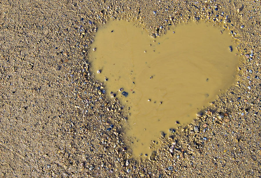 Love In A Muddy Puddle Photograph