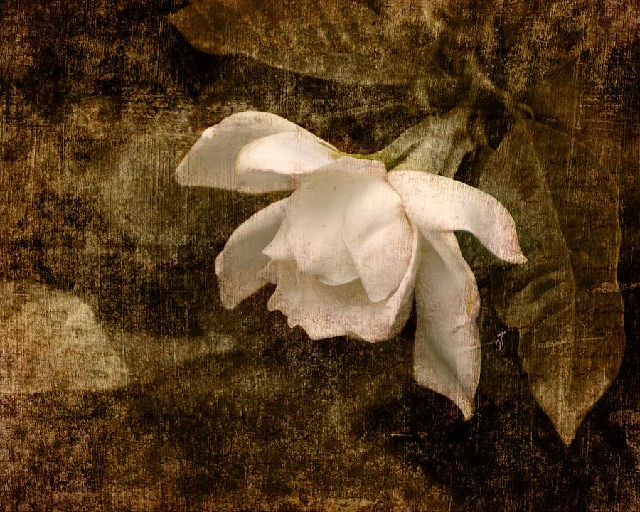 Love Letter Ix Cape Jasmine Gardenia Photograph