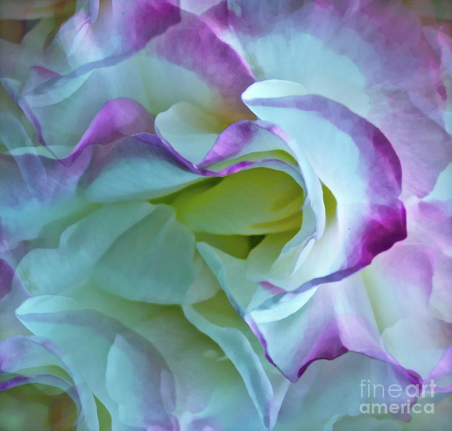 Lovely Rita Photograph  - Lovely Rita Fine Art Print