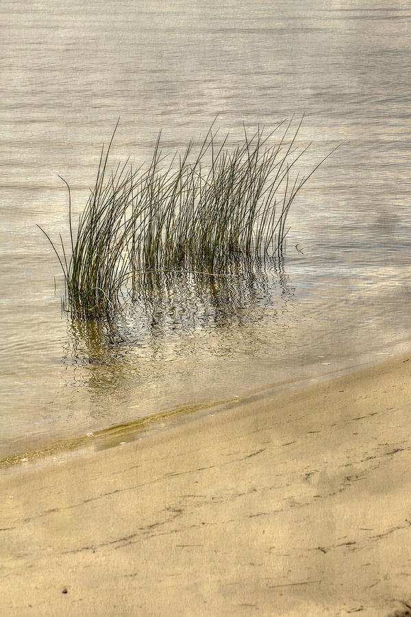 Low Tide Grass Digital Art  - Low Tide Grass Fine Art Print