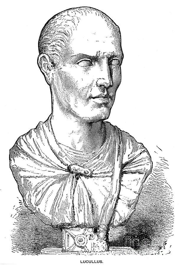 Lucius Licinius Lucullus Photograph