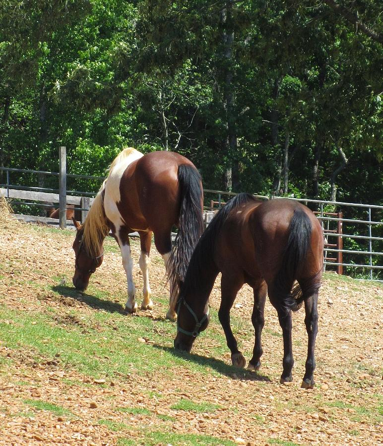 Two Horses Photograph - Lunch With A Friend by Todd Sherlock
