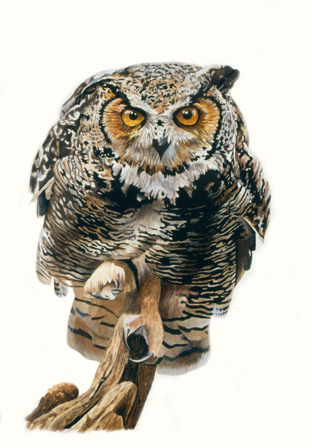 Lunchtime - Great Horned Owl Painting  - Lunchtime - Great Horned Owl Fine Art Print