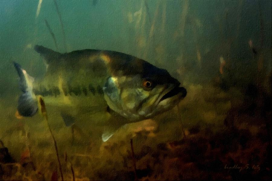 Lurking Largemouth Bass Painting  - Lurking Largemouth Bass Fine Art Print