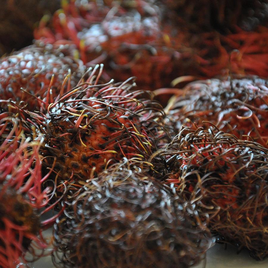 Lychee Fruit 2 Photogr...
