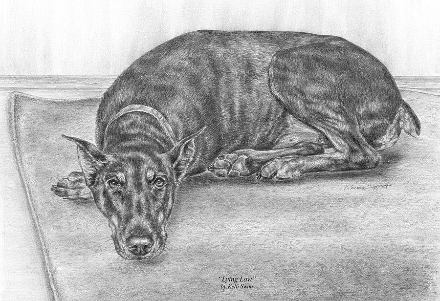 Lying Low - Doberman Pinscher Dog Art Print Drawing  - Lying Low - Doberman Pinscher Dog Art Print Fine Art Print