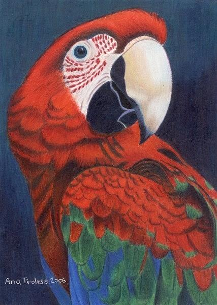 Red Parrot Drawing Images amp Pictures Becuo