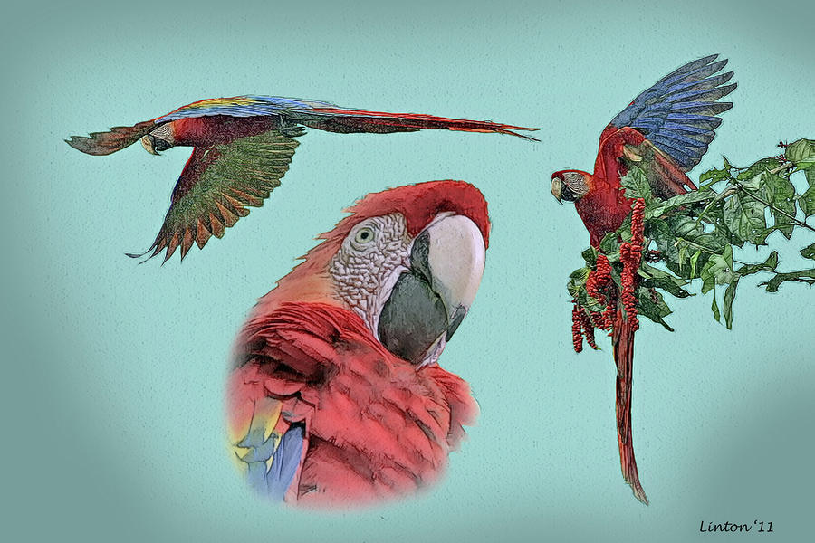 Macaw Sketch Digital Art  - Macaw Sketch Fine Art Print