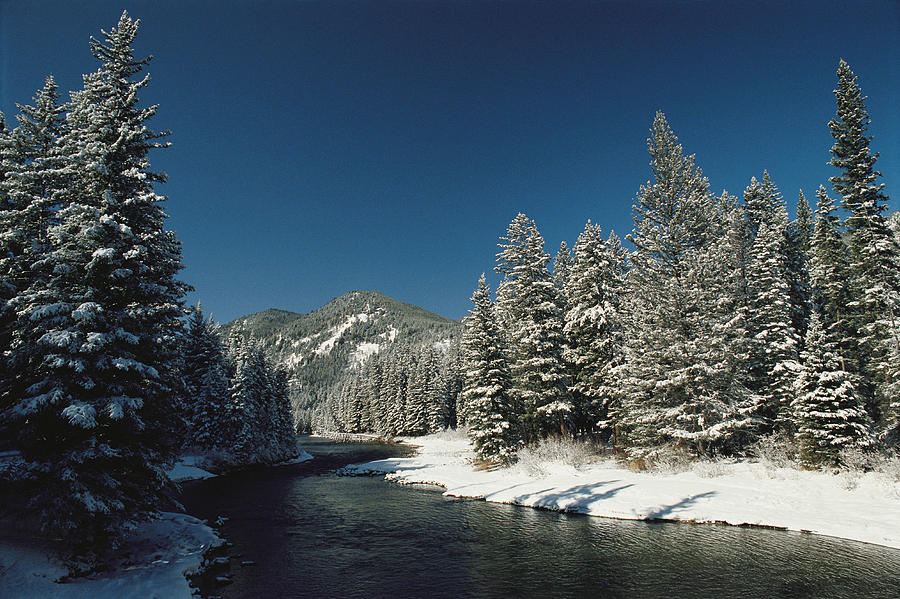 Madison River, Gallatin National Photograph