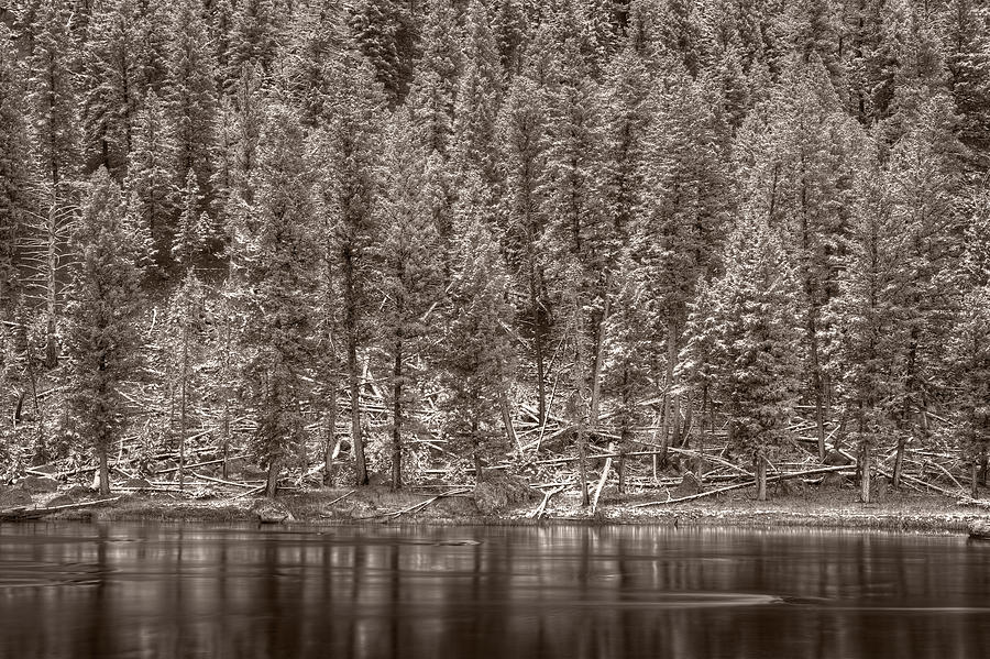 Madison River Yellowstone Bw Photograph