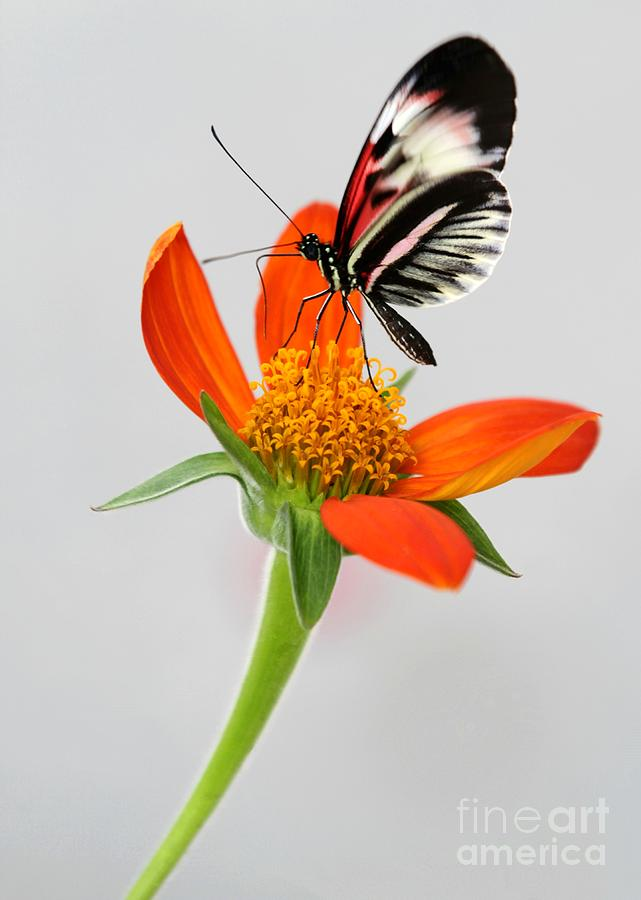 Magical Butterfly Photograph  - Magical Butterfly Fine Art Print