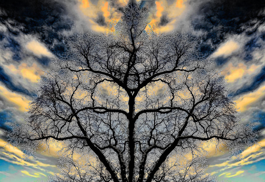 Magical Tree Photograph