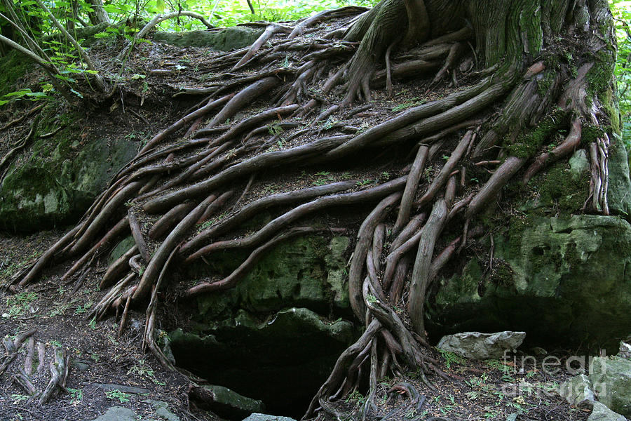 Roots Photograph - Magical Tree Roots by Chris Hill