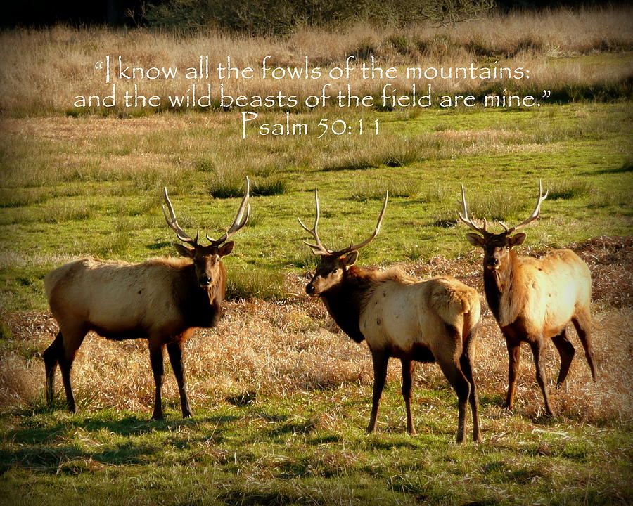 Magnificent Bull Elk Psalm 50 Photograph  - Magnificent Bull Elk Psalm 50 Fine Art Print