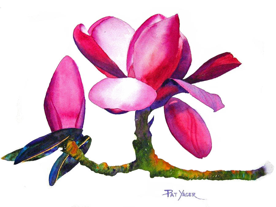 Magnificent Magnolia Painting  - Magnificent Magnolia Fine Art Print