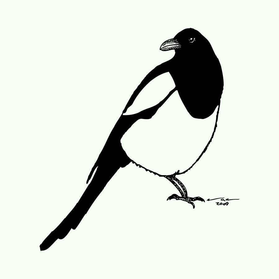 Magpie Bird Drawing  - Magpie Bird Fine Art Print