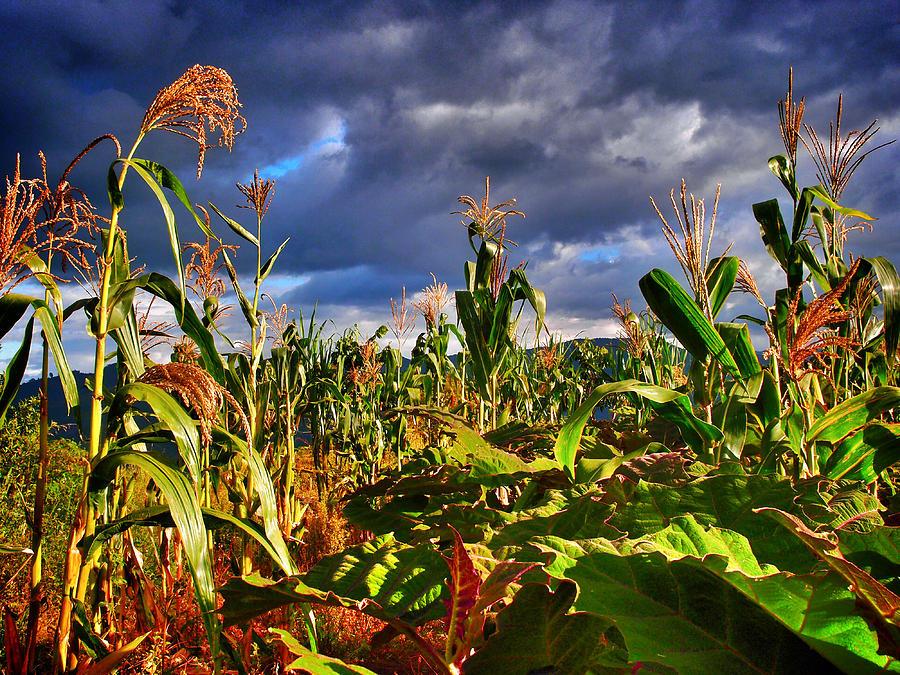 Maiz Photograph - Maiz by Skip Hunt