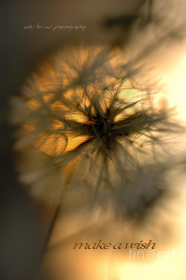 Make A Wish Photograph  - Make A Wish Fine Art Print