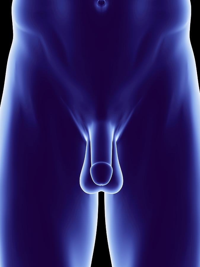 Male Genitalia, Artwork Photograph