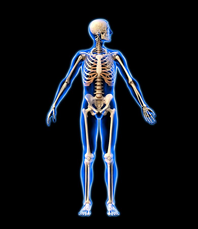 Male Skeleton, Artwork Photograph  - Male Skeleton, Artwork Fine Art Print
