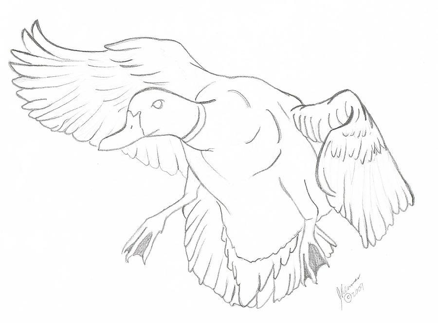 How to draw mallard ducks