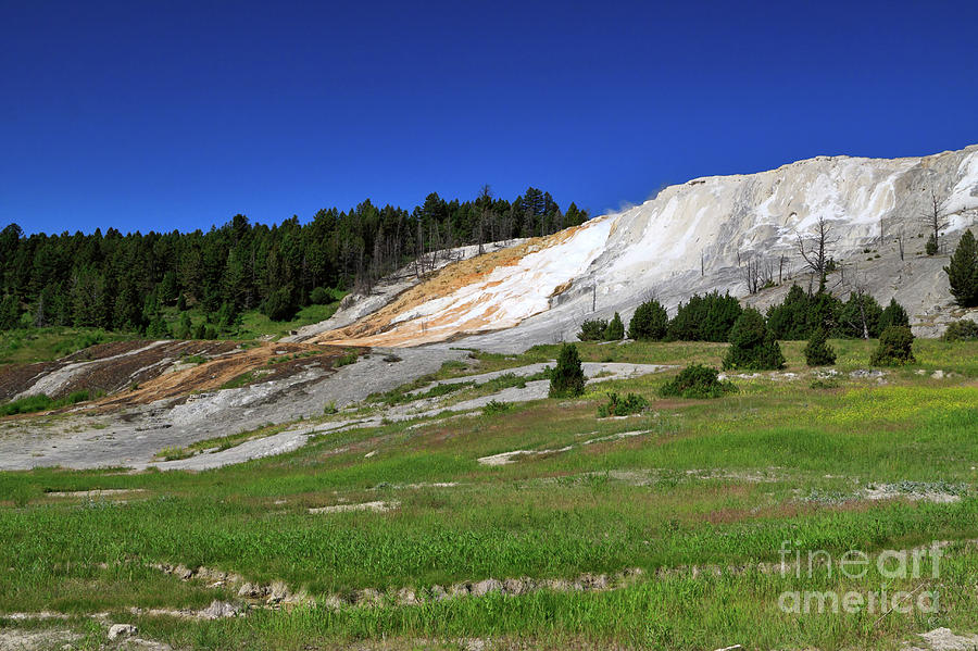 Mammoth Hot Springs Lower Terrace Photograph  - Mammoth Hot Springs Lower Terrace Fine Art Print